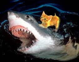 cute baby great white shark. Interesting Cute Great White Shark And Cute Little Kitten Are Best Friends Forever The  Awesome Sight You For Baby
