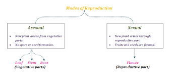 Reproduction Different Modes Of Plant Reproduction Byjus
