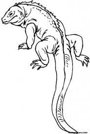 Small Picture Coloring pages for kids Lizard With Long Tail Printable Coloring