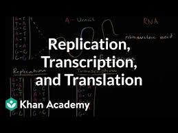 Phonetic board game using ipa decoding. Dna Replication And Rna Transcription And Translation Video Khan Academy