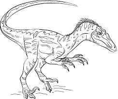 Coloriage Dinosaure Velociraptor Imprimer Sur Coloriages Info