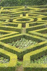 Disegno geometrico della siepe verde aiuola nel giardino formale