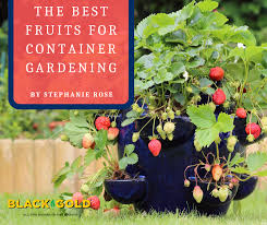 best fruits for container gardening