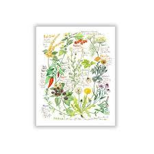 Botanical Chart Plant Illustration Medicinal Plant Print Heal Herb Print Herb Chart Art Print Healing Herb Poster Watercolor Painting