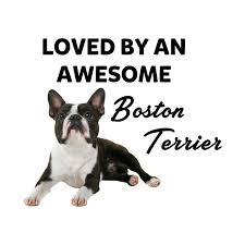 Boston Terrier Size Chart Boston Terrier