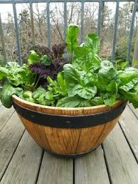 grow salad greens in containers spinach
