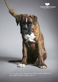 animal cruelty ads. Interesting Cruelty Print Ad By Hilanders Inside Animal Cruelty Ads L