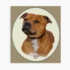 Staffordshire Bull Terrier Art Gifts ...