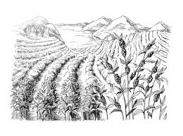 coffee plantation illustration. Wonderful Coffee Coffee Plantation Landscape In Graphic Style Handdrawn Vector Illustration  Stock Vector  70559587 With Coffee Plantation Illustration N