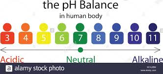 Body Scale Chart The Ph Balance Scale Chart In A Human Body Vector
