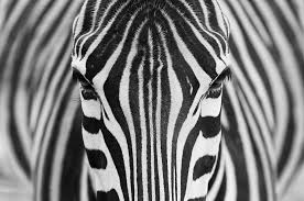 Breathtaking Patterns In Nature Paul Canning Fashion
