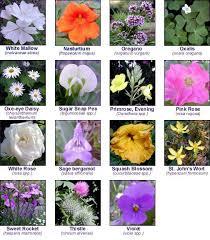 Edible Flowers Szarek Greenhouses Edible Flowers Flower