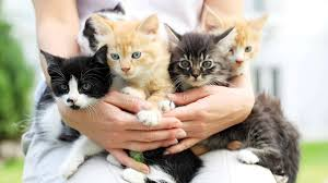 Don't worry if you're a 'crazy <b>cat lady</b>', new research says it's not such ...