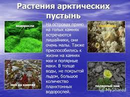 Презентация на тему Зона Арктических пустынь Урок окружающего  4 Растения арктических пустынь