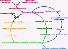 Fluid Electrolyte Balance Summary