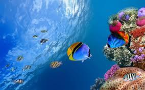 Aquarium Live Wallpaper for Android ...