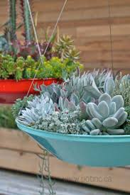 The Hover Dish Collection by Pot Inc succulents in pots