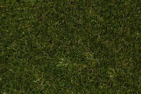 fake grass. Dakota4 Dakota3 Dakota2 Fake Grass E