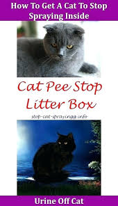 how to get cat urine smell out of mattress remove from leather boots o