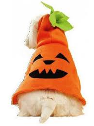 Dog Costume Patterns Unique Free Dog Halloween Pumpkin Costume Patterns Fab N' Free