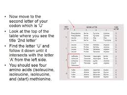 Use Your Codon Chart To Determine The Amino Acid Sequence How To Read A Codon Table