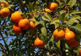 Types Of Fruit Trees That Can Grow At Home | Kerala Latest News ...