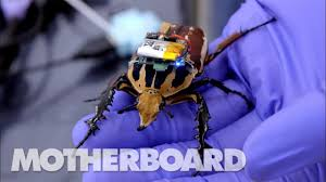 The Cyborg <b>Beetles</b> Designed to Save Human Lives - YouTube