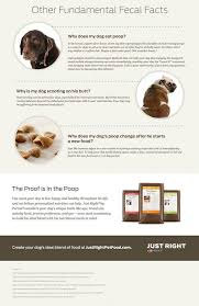 Fecal Scoring Chart What Your Dogs Poop Says About His Health American Kennel