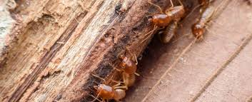 Image result for Termites Control