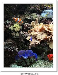 Aquarium Background Pictures Free Art Print Of Aquarium Background Nice Aquarium Background With