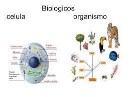 Niveles de organizacion de la materia biologia
