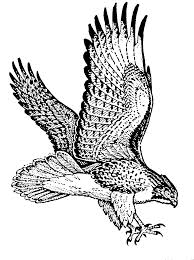 hawk clipart. Exellent Clipart Red Hawk Clipart Kid To Hawk Clipart