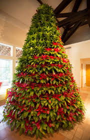 Bromeliad Christmas Tree in Visitor Center | naturetime