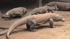 Komodo Wisata Tours And Travel