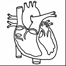 Human Heart Coloring Pages Pdf With Science Coloring Pages Pdf