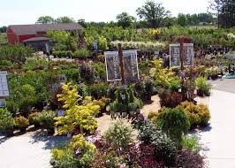 many plants to fulfil your gardening ideas