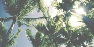 Palm trees tumblr header Palm Leaf We Heart It Palm Tree Header by tomlinsonrockme On We Heart It