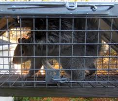 animal trapping services