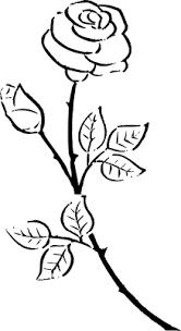 Rosa Da Disegnare