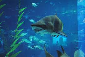 baby hammerhead sharks for sale. Exellent Sharks After  With Baby Hammerhead Sharks For Sale H