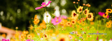 flower meadow spring free facebook timeline profile cover nature