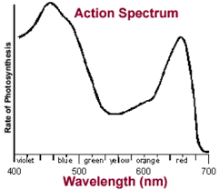 Action Spectrum Write A Note On Action And Absorption Spectrum From Biology