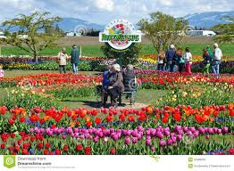 people enjoying the spring weather at the roozengaard gardens in mt vernon washington