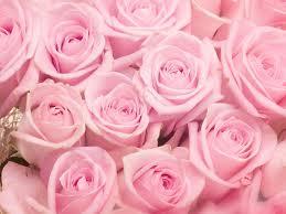 Roses Flowers Wallpapers Wallpaper Roses Flowers Wallpaper Group 62 Hd Wallpapers