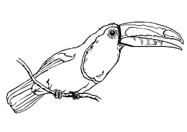 Small Picture Coloring page bird toucan img 20699