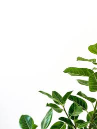 white background. Unique Background Green Leafed Plant For White Background G