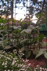 Veggie garden by Wendy Hanson Mazet – Northern Nevada Horticulture
