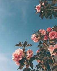 Aesthetic Pink Flower Backgrounds ...