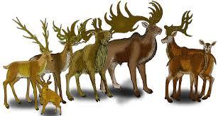Гигантские <b>олени</b> — Википедия