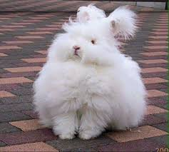 Jennifer gets a visit from the funny bunny at her going away party. Pin By Rosie Loar On Soft And Cuddly Cute Animals Angora Bunny Cute Bunny